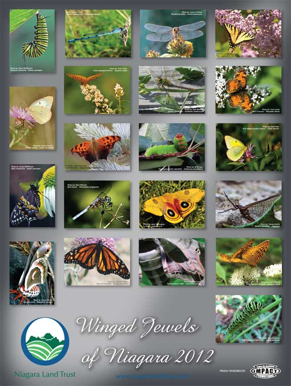 Winged Jewels of Niagara Poster